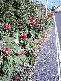 2007/09/22 館山サイクリング